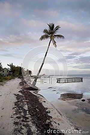 Lone Palm on the Beach