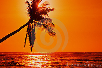 Lone Palm Sunset