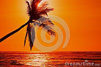 Lone Palm Sunset