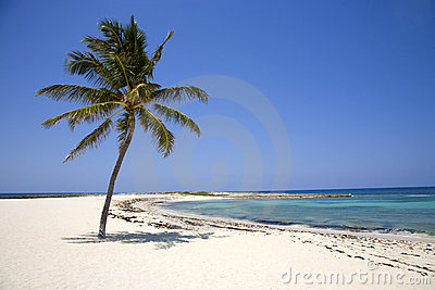 Lone Palm Tree on the Beach