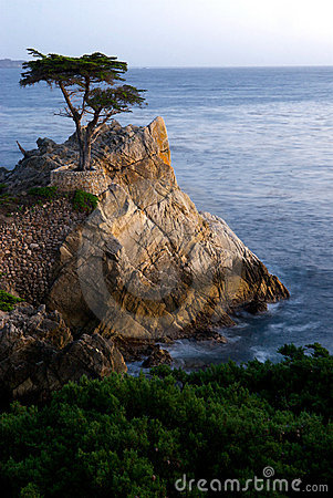 Free Lone Pine Rock At Pebble Beach Royalty Free Stock Photos - 8698148