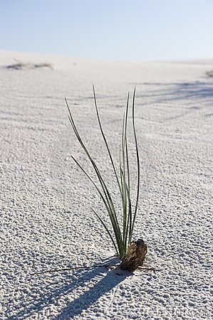 A lone plant in the desert