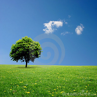 Free Lone Tree Stock Image - 15639011