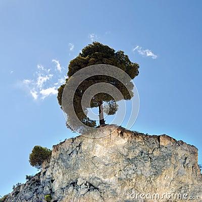 Free Lone Tree Stock Photography - 17796132
