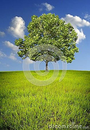 Free Lone Tree Royalty Free Stock Photos - 5824298