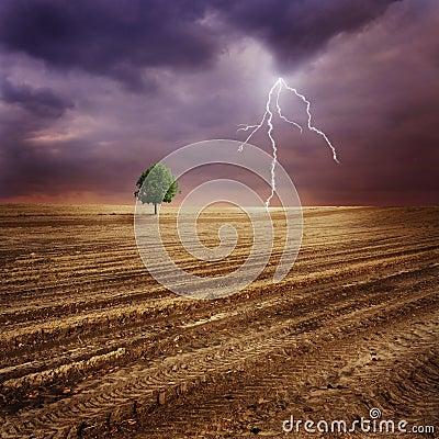 Free Lone Tree And Lightning Stock Image - 18835031