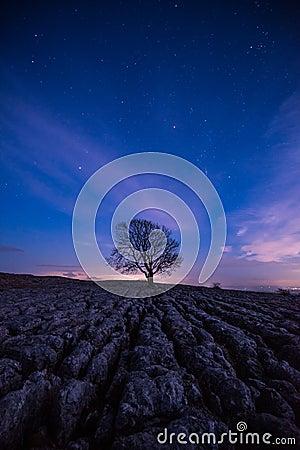 Free Lone Tree At Malham By Night Royalty Free Stock Image - 117371936