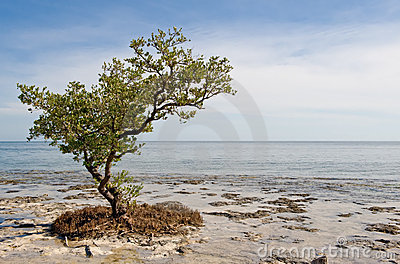 Lone tree on beach