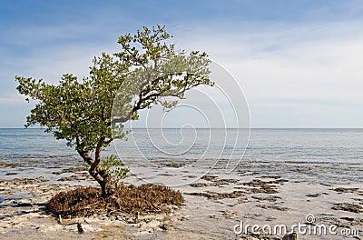 Lone tree on beach