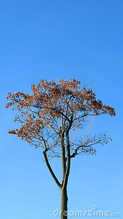 Lone tree and blue sky
