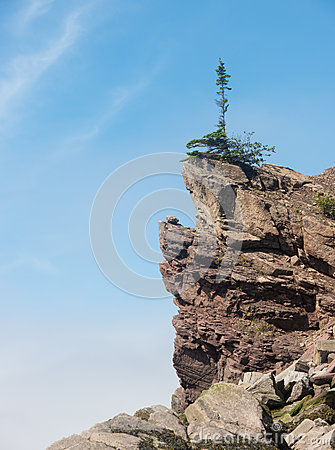 Lone tree on cliff