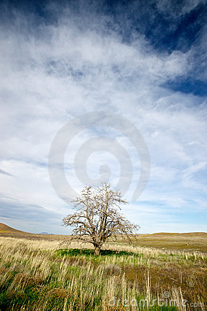 Lone Tree in a Field of Grass