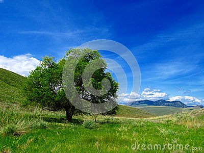 Lone tree in field with sky