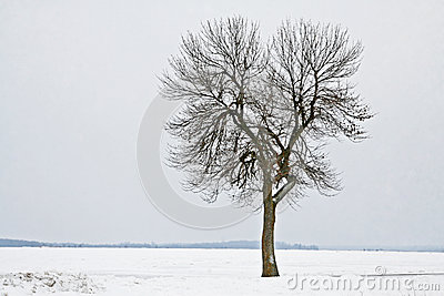 Lone tree in a field of snow
