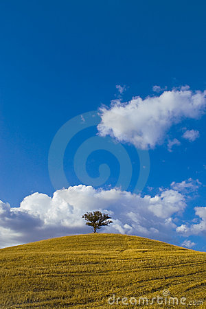 Lone Tree Hill Stock Photo - Image: 2994790