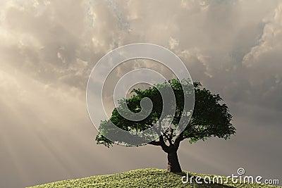 Lone tree on hillside