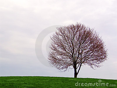 lone tree on the horizon Stock Photo