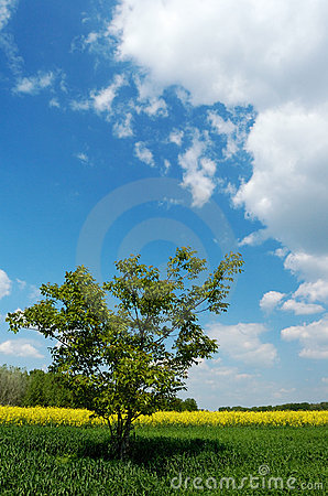 Free Lone Tree In A Field Stock Photography - 1529742
