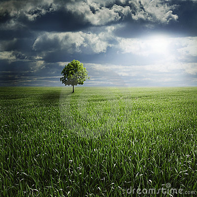 Free Lone Tree In Field With Storm Stock Photography - 18834982