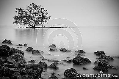 Lone tree on an island