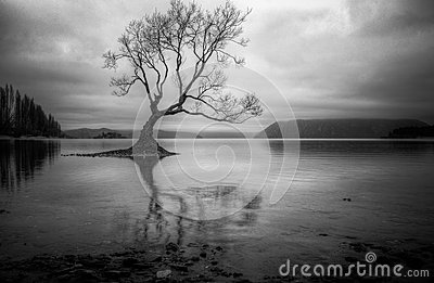 Lone tree in a lake
