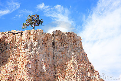Lone Tree on Rocky Cliff
