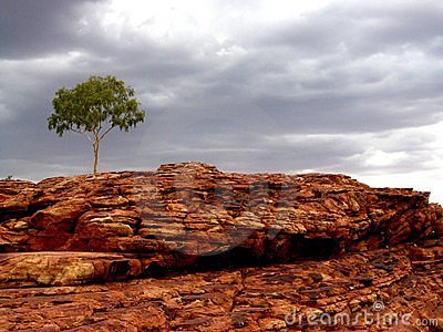 Lone tree in rocky landscape