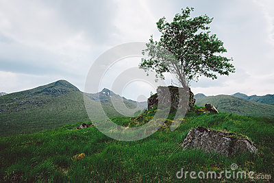 single women in lone tree Standing lonely single girl surrounded by happy romantic couples walking together or pairs of men and women on date  a lone woman walks away,  lone tree.