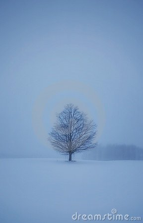 Lone tree in snowy landscape