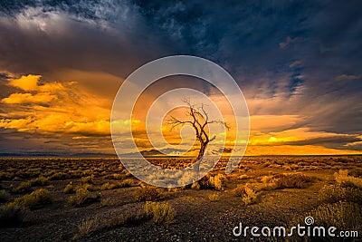 Lone Tree at Sunset Pyramid Lake