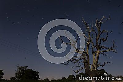 Lone tree casino night