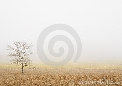 Lone Tree In A Wheat Field