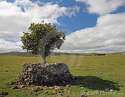 A lone tree on the Yorkshire Dales