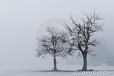 Lone trees landscape