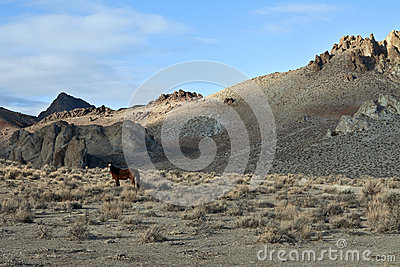 A lone Wild Mustang in the Painted Hills