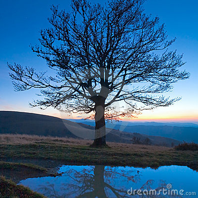 Lonely autumn naked tree on night mountain