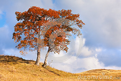 Lonely autumn tree