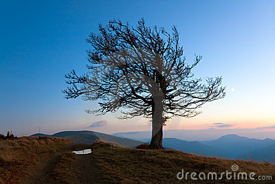 Lonely autumn tree on night mountain hill top