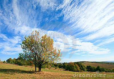 Lonely autumn tree on sky background.