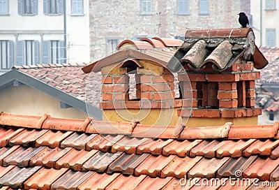 Lonely bird on chimneys