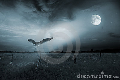 Lonely bird in moonlight