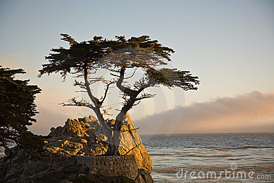 Lonely Cypress Tree Editorial Photo
