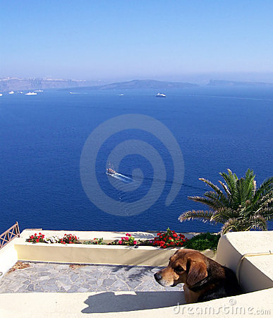 Free Lonely Dog Stock Photos - 2696603