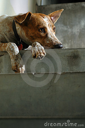 Free Lonely Dog Royalty Free Stock Photography - 5618687
