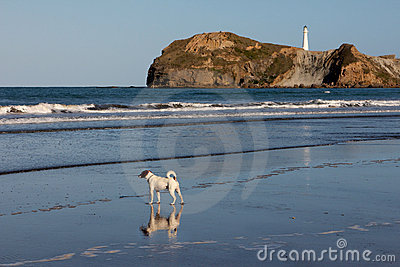 Lonely Dog on the beach