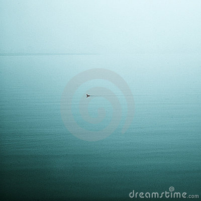 A lonely duck