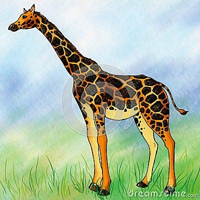 Lonely giraffee in the field