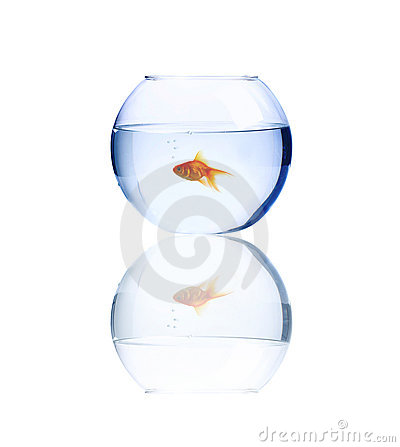 Lonely Goldfish