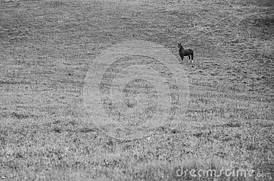 Lonely horse in field
