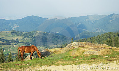 Lonely horse on mountain